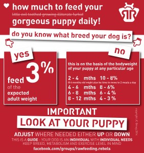 Puppy Guide