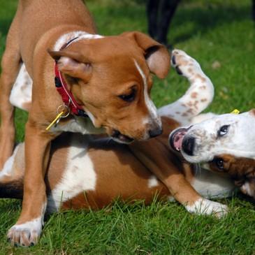 Feeding Your Puppy
