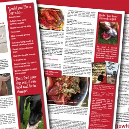 Raw feeding Dogs – Starter Guide
